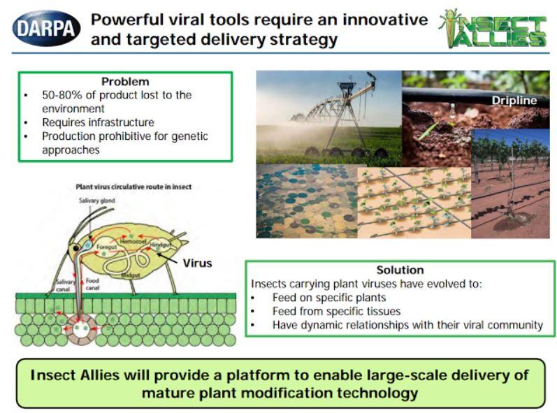 Diapositiva de DARPA que detalla el programa «Insect Allies»
