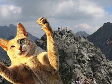Escalador llega a la cima del pico más alto de Polonia y encuentra a un gato doméstico sentado cómodamente