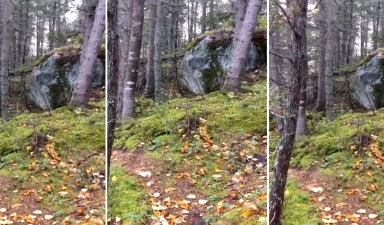 Escalofriante vídeo muestra un «bosque que respira»