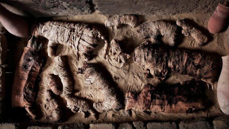 Hallan gatos y escarabajos momificados en antigua tumba egipcia
