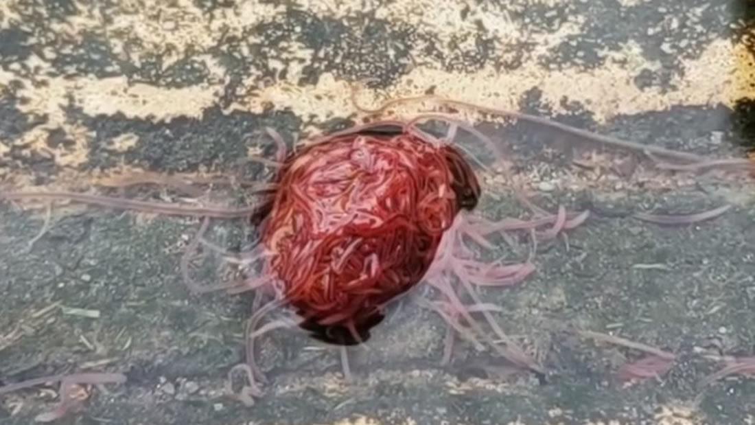 Un «cerebro» palpitante es grabado en aguas residuales de Texas