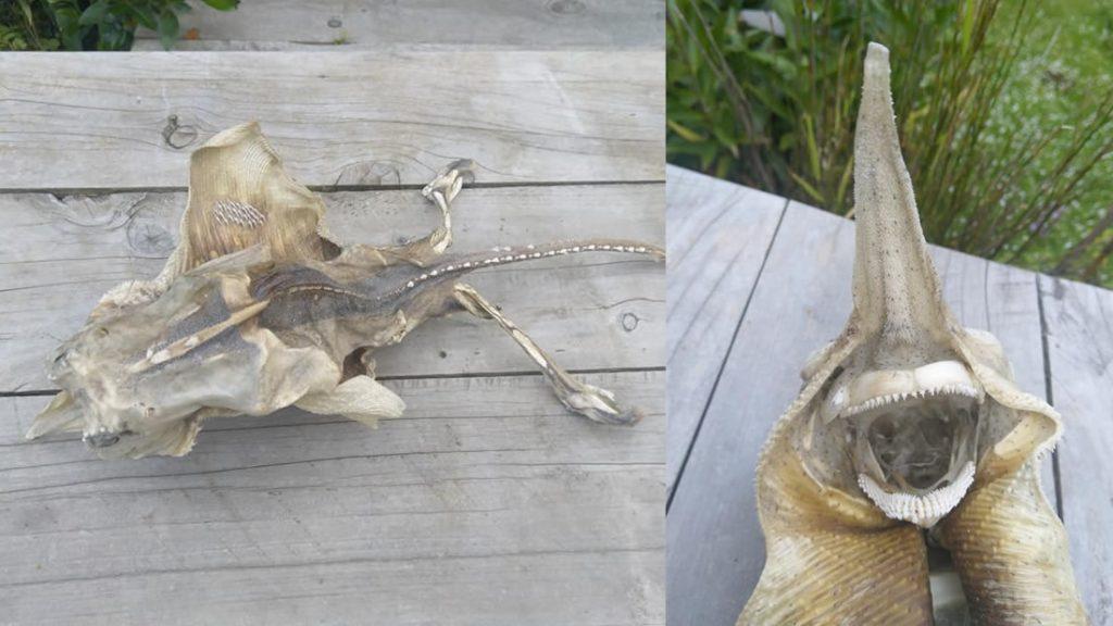 Esta es la rara criatura hallada en Nueva Zelanda