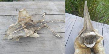 Una extraña criatura de apariencia «alienígena» es hallada en playa de Nueva Zelanda
