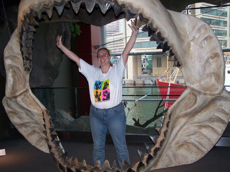 Tamaño de la mandíbula de un megalodón comparada con un humano