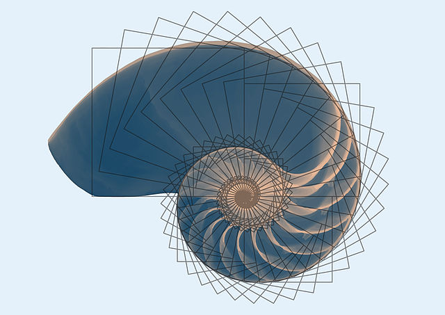 La espiral de Fibonacci en los animales