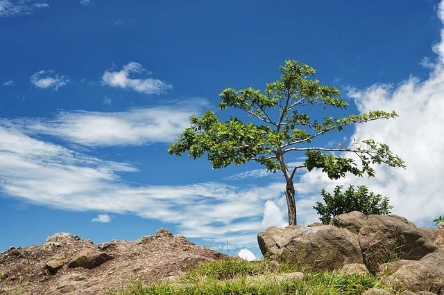 Científicos han planteado crear super árboles modificados genéticamente para favorecer al medio ambiente