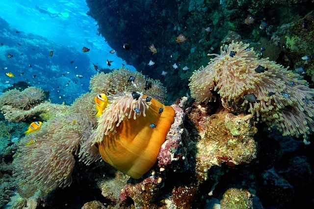 Aparte de la biodiversidad, el fondo del mar oculta una gran cantidad de minerales valiosos, que han despertado la codicia de algunas empresas mineras.