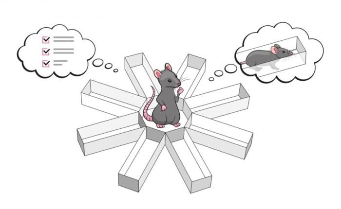 Representación de una rata en un laberinto y el experimento realizado