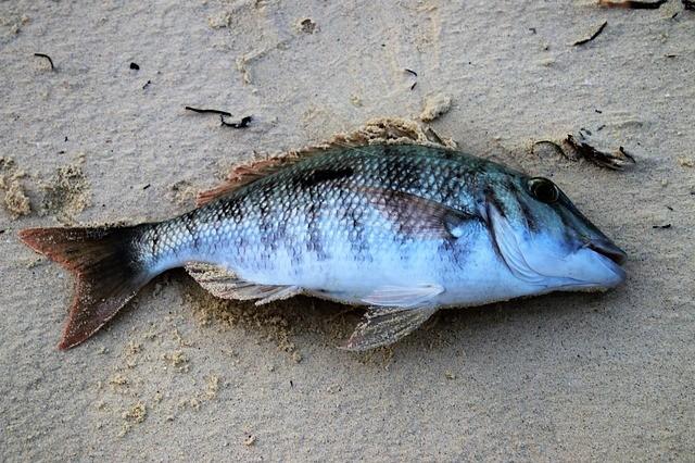 Aproximadamente el 40 por ciento del lecho marino se quedó sin oxígeno; y a mayores profundidades, se quedó totalmente sin oxígeno
