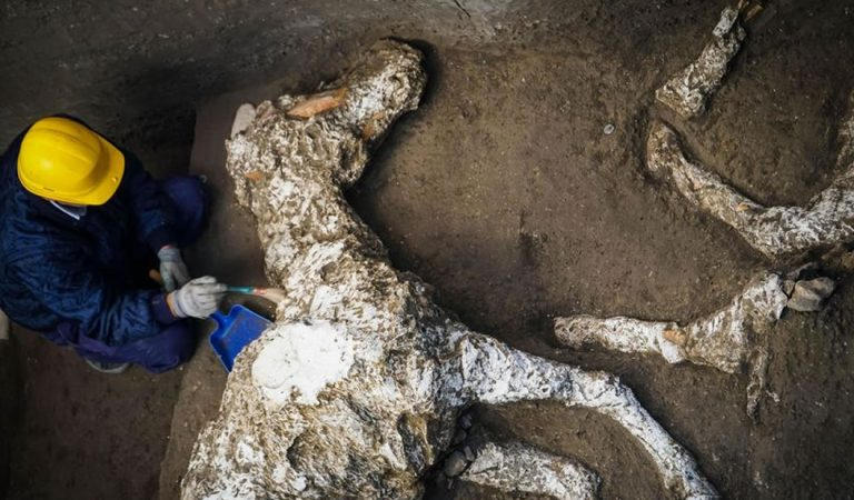 Hallan un caballo petrificado en Pompeya, muerto por la erupción del Vesubio