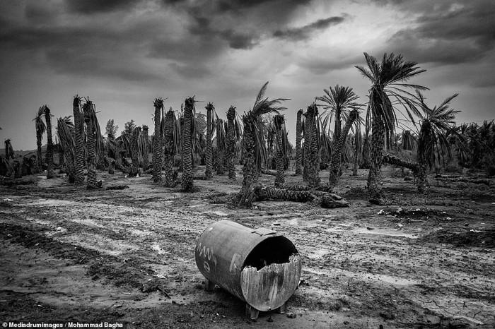 La gente por desesperación comenzó a usar químicos para cultivar palmeras, lo cual tuvo un efecto severo en la salud de las personas y no restauró su economía