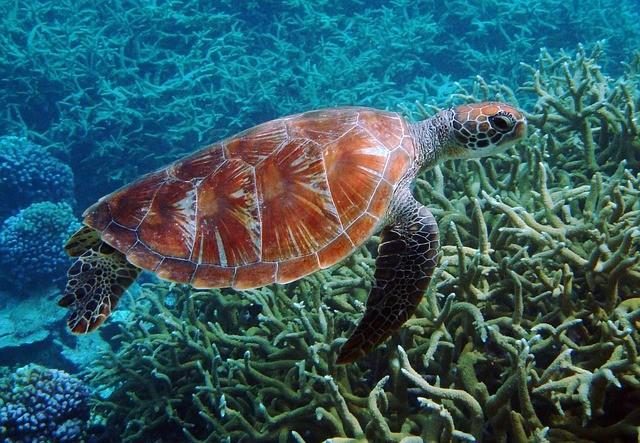 La minería en el fondo del mar podría traer el fin para muchas especies y hábitats