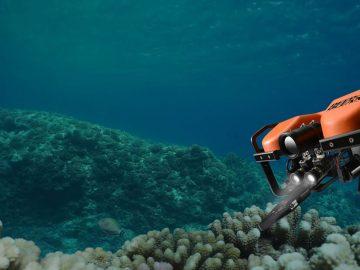 Una «fiebre del oro» en el fondo del océano podría ser el final para los ecosistemas