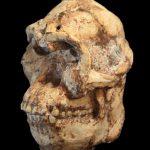 Una nueva especie de homínido podría haber sido descubierta
