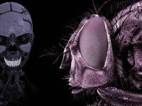 DARPA quiere crear robots conscientes usando cerebros de insectos