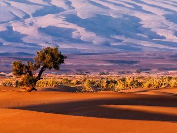 El clima extremo impide que la plantas procesen carbono