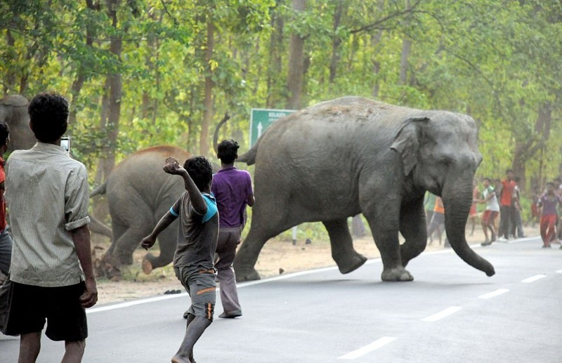 Se puede ver como un niño lanza piedras a los elefantes. La esperanza en la humanidad se pierde...