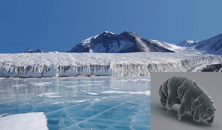 Hallan cadáveres de animales preservados en el misterioso lago bajo la Antártida