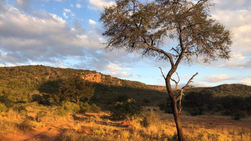 Provincia de Limpopo en Sudáfrica: una región semiárida que muestra una reducción en la absorción de carbono debido a anomalías de la humedad del suelo. Se espera que esta tendencia negativa continúe durante el siglo XXI
