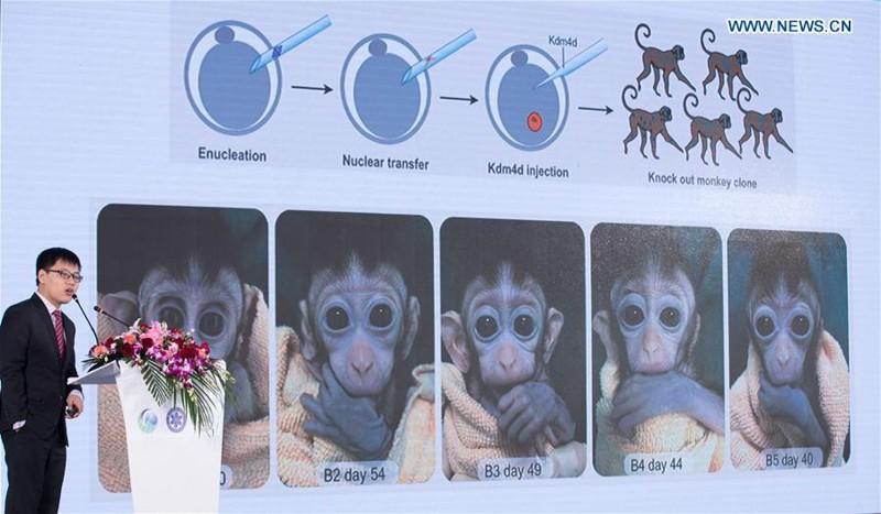 Liu Zhen, un investigador del Instituto de Neurociencia de la Academia de Ciencias de China, presenta los logros relativos de investigación sobre los monos clonados