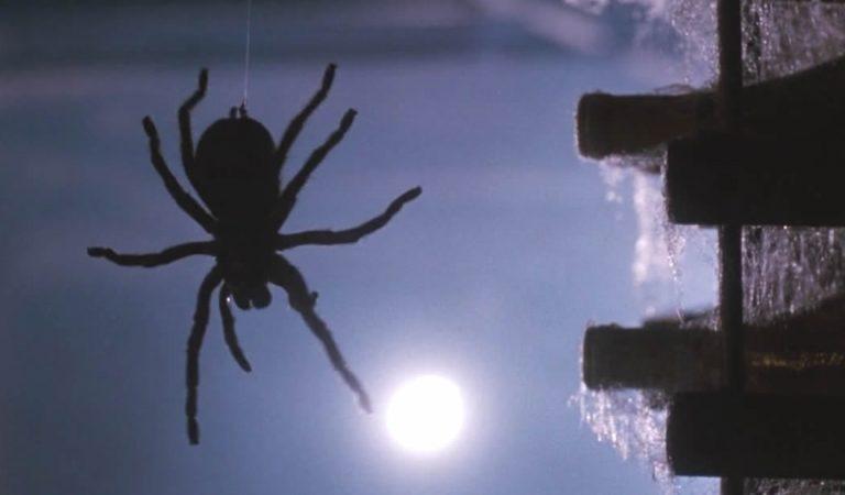 Vídeo muestra arañas «lloviendo» del cielo en Brasil