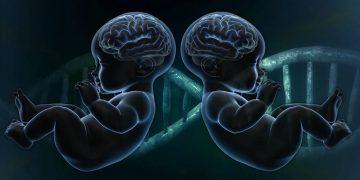 Gemelas editadas genéticamente podrían tener «cerebros mejorados»