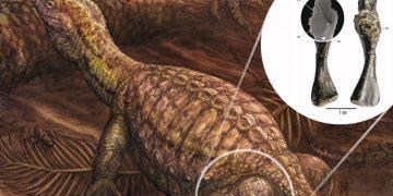 Cáncer de hueso maligno encontrado en una tortuga de 240 millones de años