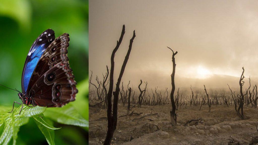 Apocalipsis de insectos: revelan hallazgos alarmantes sobre la disminución de insectos en Europa