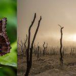 Extinción de insectos: advierten de un colapso ecológico en unas décadas