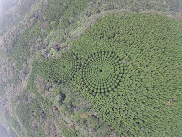 Otra imagen del bosque crop circle. No es una obra alienígena