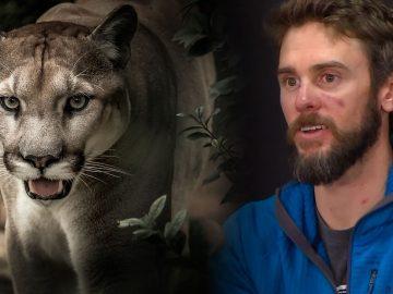Hombre mata a un puma con sus propias manos en Colorado, EE.UU.