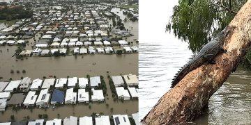 Inundación histórica en Australia ha causado que cocodrilos y serpientes invadan las calles