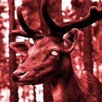 La enfermedad de los ciervos «zombies» podría propagarse a los humanos, advierten expertos