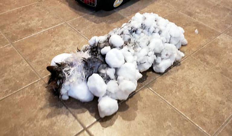 Resucitan a un gato congelado durante el vórtice polar en Montana