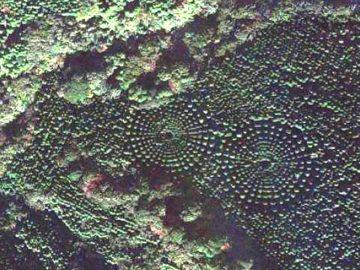 Un misterioso bosque «crop circle» aparece en Japón