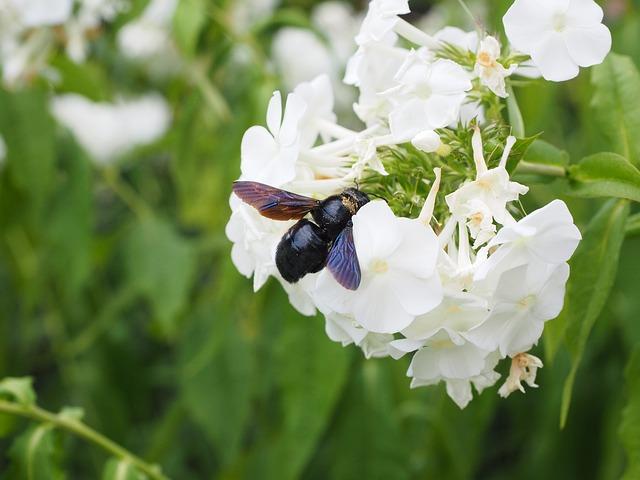 Abejas y otros polinizadores desaparecen de una cuarta parte de hábitats del Reino Unido