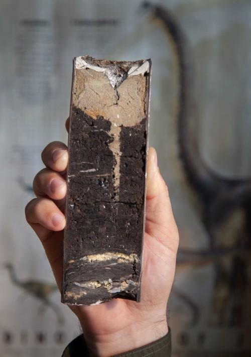 Una muestra central del sitio de DePalma. El sitio puede contener una transcripción geológica precisa del ataque de asteroides que casi destruyó la vida en el planeta