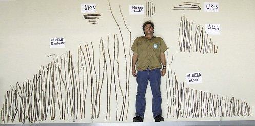 Artefactos utilizados por chimpancés, hallados entre 2004 y 2007 en zonas de estudio en África