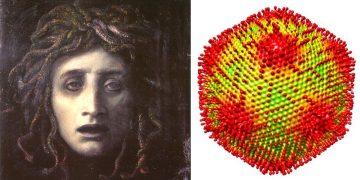 Descubren un virus que convierte a sus huéspedes en «piedra», el «Medusavirus»