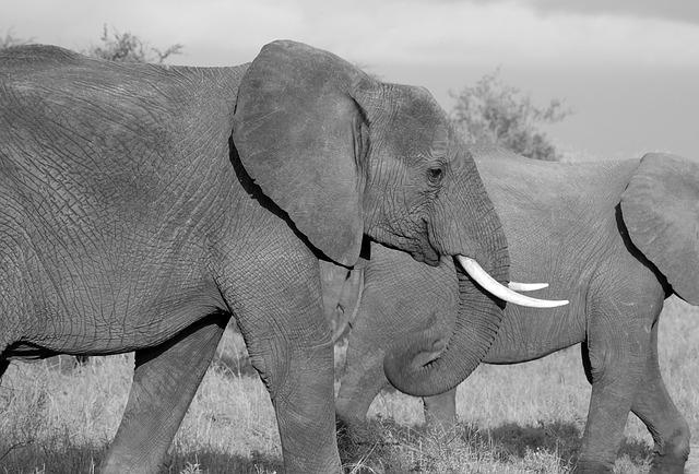 Castigarán con pena de muerte a los cazadores furtivos en Kenia