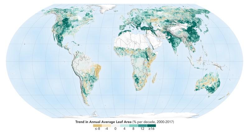El mundo es un lugar más verde de lo que era hace 20 años, como se muestra en este mapa, donde las áreas con el mayor aumento de follaje se indican en verde oscuro. Los datos de un instrumento de la NASA que orbita la Tierra a bordo de dos satélites muestran que la actividad humana en China e India domina esta ecologización del planeta
