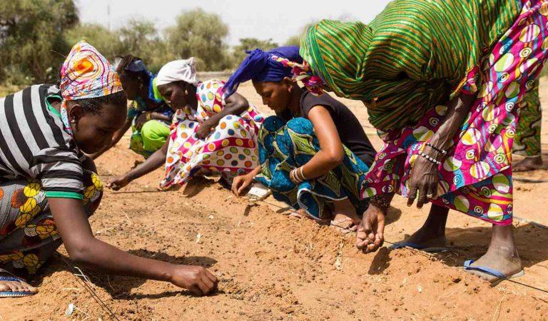 Un grupo de mujeres plantando árboles que serán parte de la Gran Muralla Verde