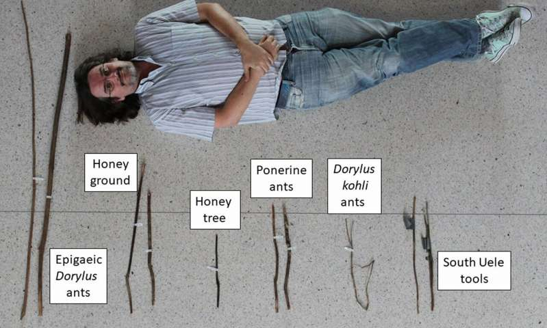 Tipos de herramientas de chimpancé en el norte de la República Democrática del Congo. De izquierda a derecha: herramienta para la extracción de las hormigas Epigaeic Dorylus , miel (molida), miel (árbol), hormigas Ponerine, hormigas Dorylus kohli ; herramientas Uele sur