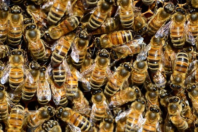 Morgan Freeman convierte su rancho de 50 hecctáreas en un santuario de abejas