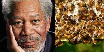 Morgan Freeman convierte su rancho de 50 hectáreas en un santuario de abejas