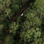Plantar mil millones de árboles: el plan de Australia para luchar contra el cambio climático