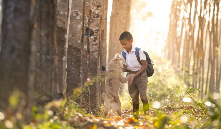 Respeto a los animales: la nueva asignatura impartida en colegios de España