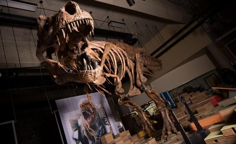 El esqueleto imponente y con cicatrices de batalla de «Scotty», el Tiranosaurio Rex más grande del mundo y el esqueleto de dinosaurio más grande que se haya encontrado en Canadá