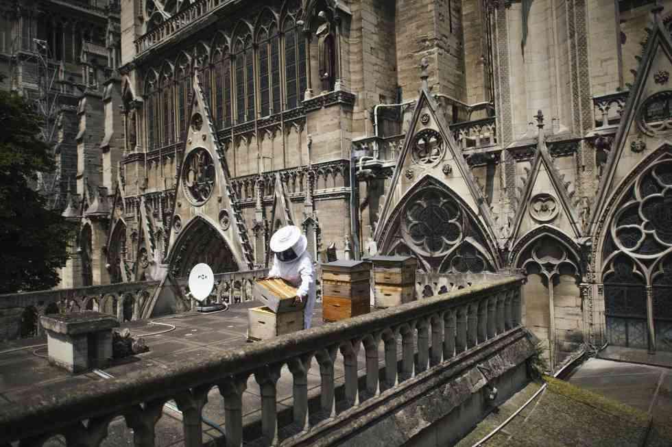 Inspección de las colmenas en una de las azoteas de la catedral de Notre Dame (2018)