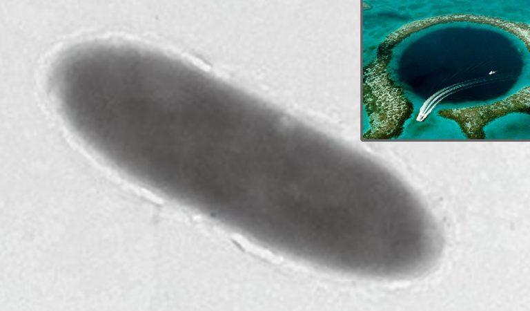 Bacterias que comen petróleo son descubiertas en la Fosa de las Marianas